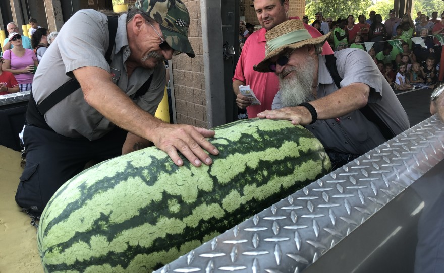 A number of cases where enormous watermelons have been recorded.