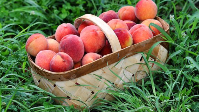 How Much Is A Peck Of Peaches? Most Useful Measurements